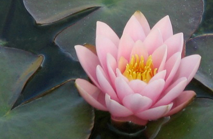 Lotus-Home